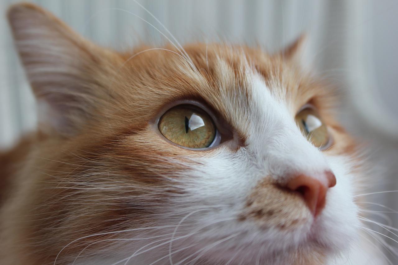 2.cat-681329_1280