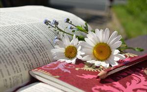 9-8.daisies-676368_1280-min_R