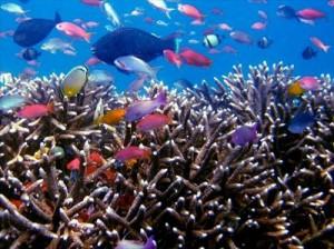 4人家族の生活費の主要部分の食費を変動費と固定費で分けて節約tropical-fish-256563_1280_R