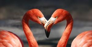 flamingo-600205_1280_R