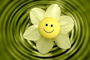 flower-233838_1280_R