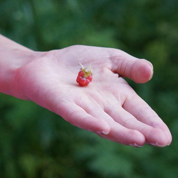 raspberry-handed-166378_1280_R