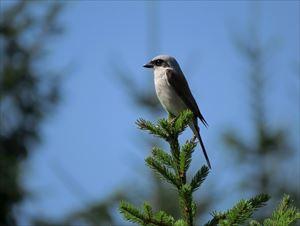 9-9.bird-284493_1280-min_R