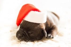 s_puppy-583415_640